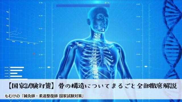【国家試験対策】骨の構造について1からまるごと全部徹底解説