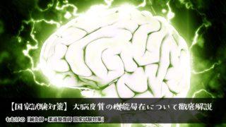 【国家試験対策】ゴロ合わせで覚える!ややこしい大脳皮質の機能局在について徹底解説